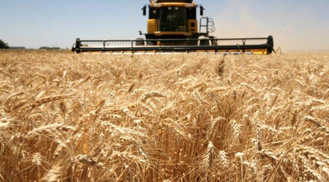 En Rosario la exportación empalmó las cosechas de trigo y propuso 160 dólares