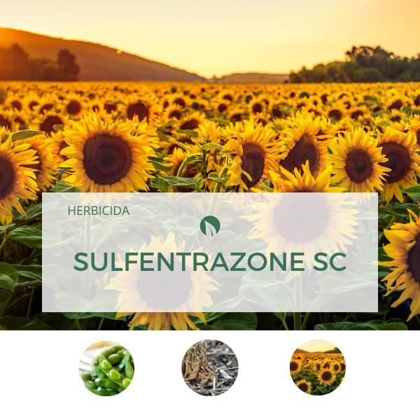 Sulfentrazone SC